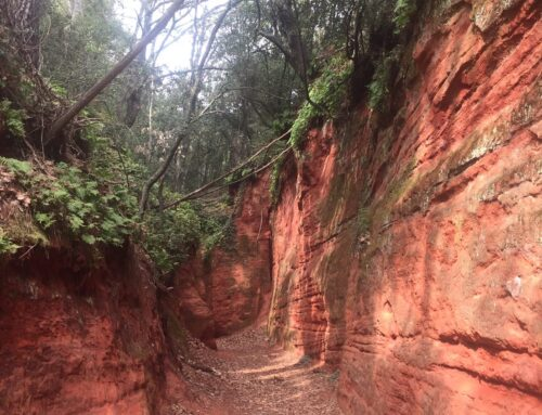 La petite forêt d'ocres