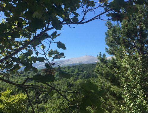 Balade au Mont Ventoux, accessible aux enfants : le Rat