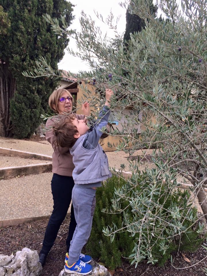 Verguettes - Récolte Olives